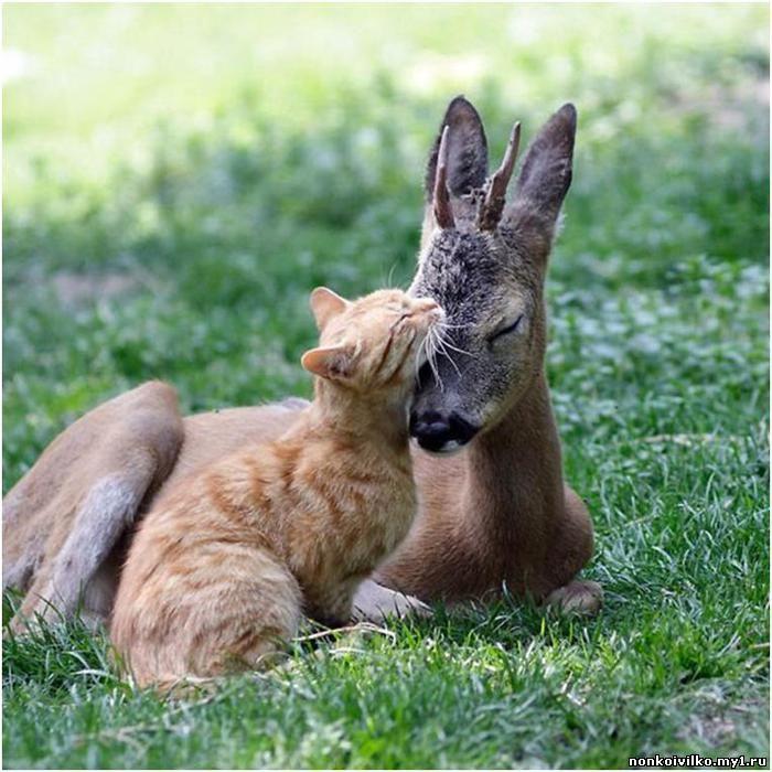 кот и косуля