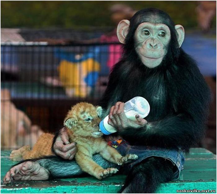 обезьяна и тигренок